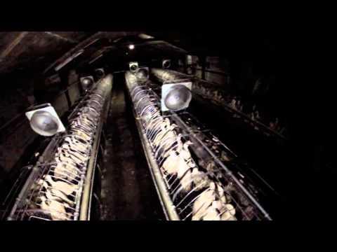 Maltrato en granja que suministra al mayor productor de foie gras