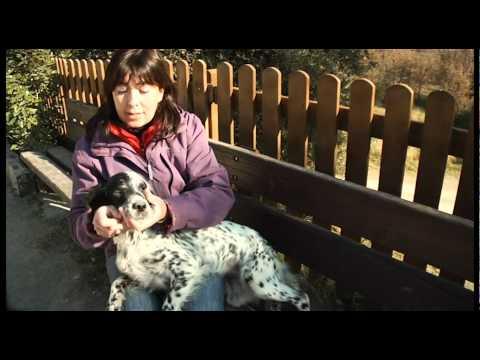 Documental Artículo 337. Maltrato animal en España. Producciones Audiovisuales. Pandora Box TV