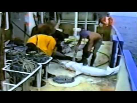 La crueldad del aleteo de tiburones