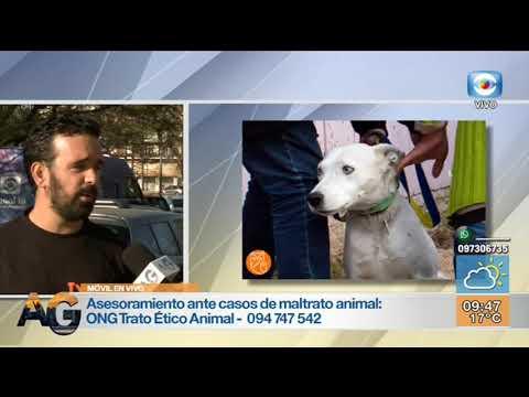 Móvil - ONG reclama penalización al maltrato animal con énfasis en la zoofilia