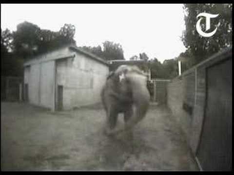 Elefante autoconsciente