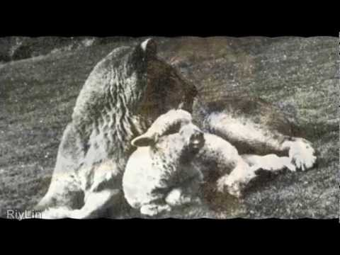 **True Story** The Vegetarian Lioness~