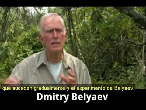 Los zorros domesticados de Dimitri Belyaev (Raymond Coppinger)