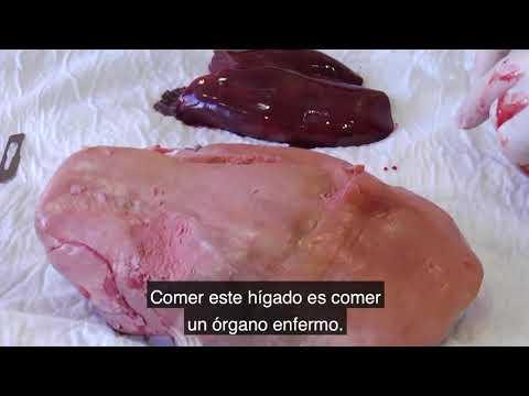 La TORTURA del FOIE GRAS 🦆
