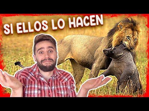 ¡Los DEMÁS animales TAMBIÉN LO HACEN! - Vegan Flash