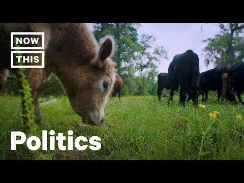 Texas Cattle Ranchers Go Vegan, Turn Farm Into Animal Sanctuary | NowThis