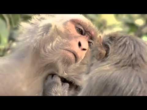 La Mente Animal, ¿Son Conscientes Los Animales, BBC