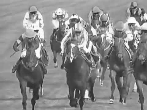 Las carreras de caballos son maltrato