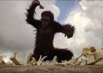 La teoría del mono asesino (Pablo Briand, junio 2009)