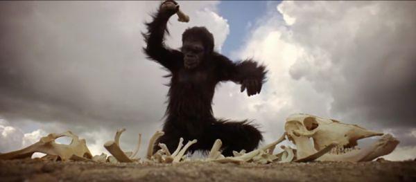 Primate usa un hueso