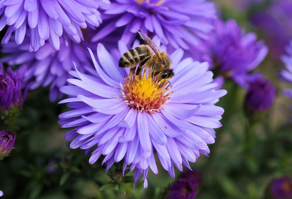 La miel es de las abejas