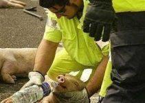 """ARGUMENTO: """"Los veganos respetan a los animales por autointerés, el altruismo no existe"""""""