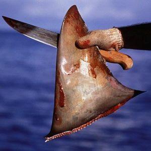 El aleteo de tiburones (finning) consiste en cortarles las aletas