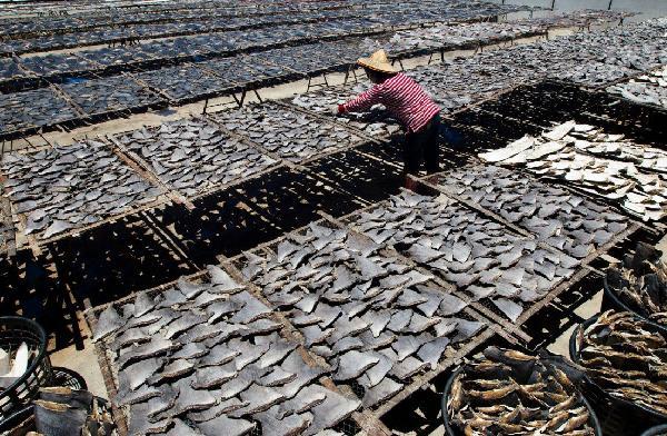 Secado de aletas tras aleteo de tiburones