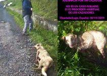 Cazador dispara a perra en Chantada