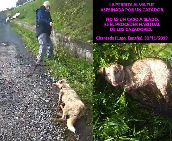 Cazador dispara a perra Alma cerca de Chantada (Lugo)
