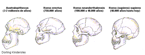 Evolucion de la dentadura humana