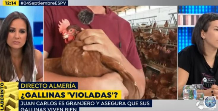 Vídeo ganadero con gallina que tiene el pico amputado