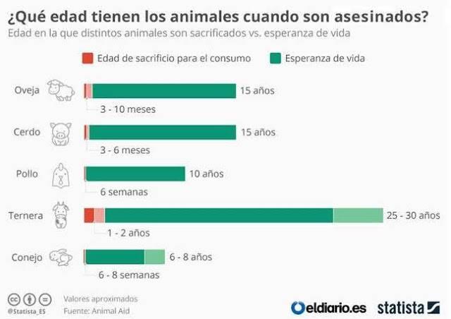 Edad a la que asesinan a los animales