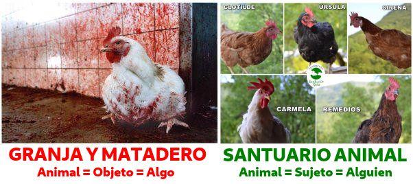 Diferencia entre granjas y mataderos frente a santuarios animales