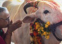 Los animales en el hinduismo