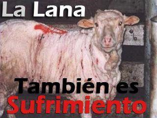 La lana produce sufrimiento