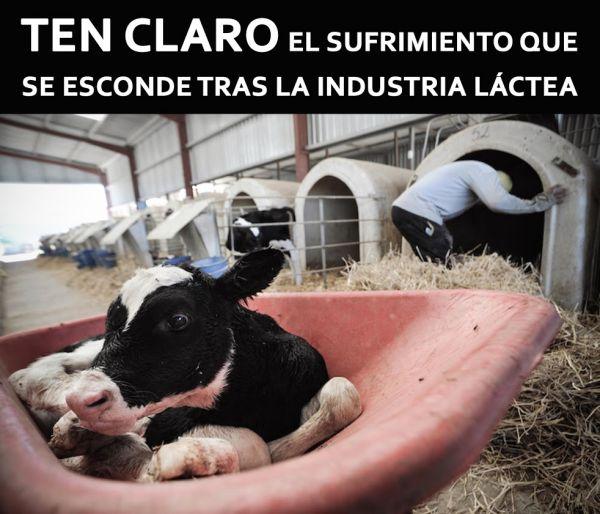 Tenlo claro la leche animal es maltrato