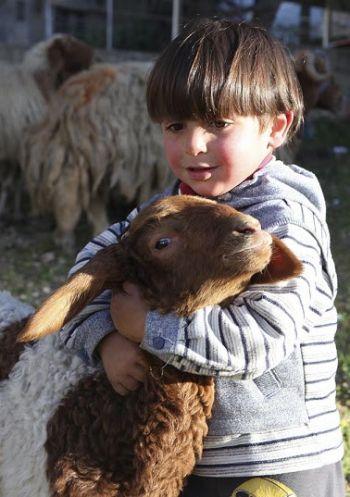 Niño abraza a una cabra