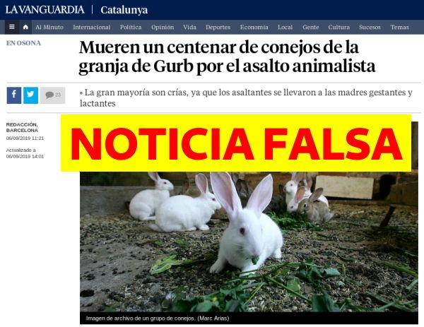 Cien conejos mueren cada segundo por culpa de ganaderos