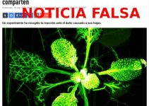"""Noticia falsa sobre """"dolor"""" de las plantas"""