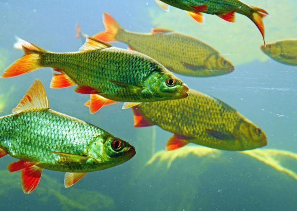 La inteligencia de los peces