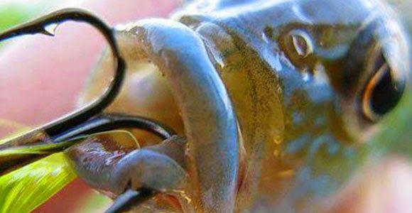 La pesca es maltrato animal