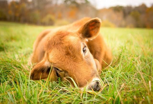 Los animales no somos comida