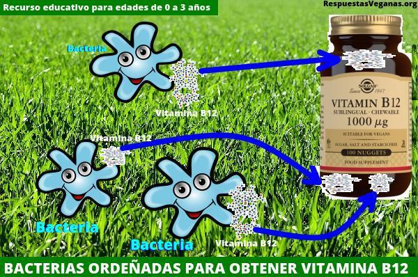 La vitamina B12 la producen bacterias