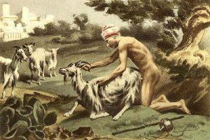 bestialismo es maltrato animal
