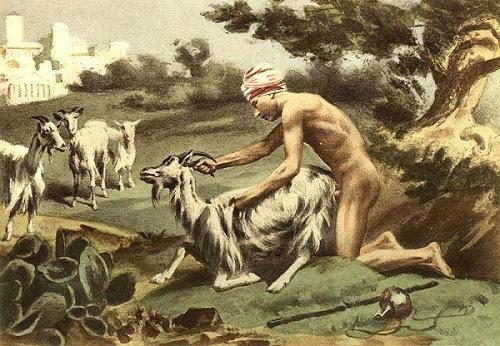 zoofilia y bestialismo es maltrato animal